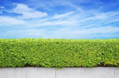 shrubs fence on blue sky background - stock photo