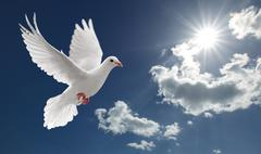 Dove in the sky Stock Photos