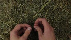 Hands searching for the needle in the hey Stock Footage