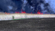 Stock Video Footage of blazing fire of dry rush - A bulrush burning orange and red