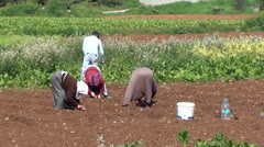 People working on the field Stock Footage