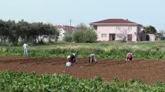 Three turkish women hard working Stock Footage