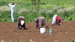Three turkish women working on the field Stock Footage