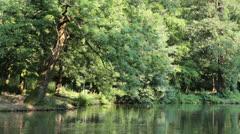 Idyllic Green Summer Lake Shore Stock Footage