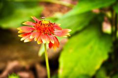Bug on a flower. Stock Photos