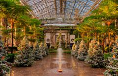 christmas trees inside the conservatory at longwood gardens, pennsylvania. - stock photo