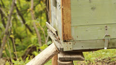 Stock Video Footage of Spring works on an apiary. beekeeping
