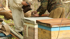 Spring works on an apiary. beekeeping - stock footage