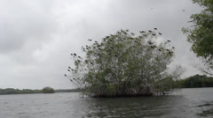Colombia birds in tree Stock Footage