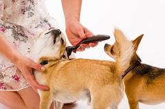 pet caring - stock photo