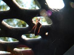 Just a Hemiptera - stock photo