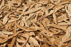Dried lingzhi mushroom Stock Photos