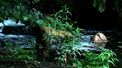 Forest Stream 2 Stock Footage