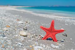 red sea star and blue water - stock photo