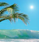 Stock Photo of palms and waves under a bright sun
