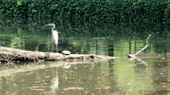 Heron, Turtle and a Duck Stock Footage