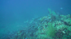 Barracuda is  on the reef among fish Stock Footage
