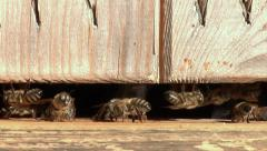 Bees at the inlet to the hive Stock Footage