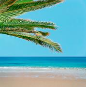 golden sand and palm tree - stock photo