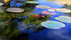 Water Reflections of Clouds, Trees and Lily Pads Stock Footage