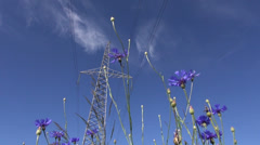 High voltage electrical tower and  cornflowers in wind Stock Footage