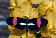 Stock Photo of heliconius