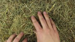 two hands are searching in the hey - stock footage
