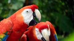 Colorful scarlet macaw Stock Photos