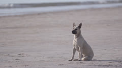 Two dogs run on the beach Stock Footage