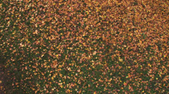 autumn leaves fall colorful - stock footage