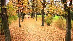 Colorful autumn grove park at fall Stock Footage