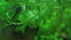 Lurking Sinister Dangerous Piranha hiding in green 3 Stock Footage