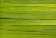Long leaf background Stock Photos