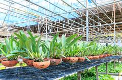 agriculture orchid farm at thailand - stock photo