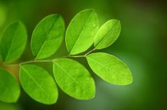 new plant life - stock photo