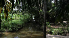 Colombia swamp 2 Stock Footage