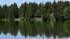 Stock Video Footage of trees on a lake
