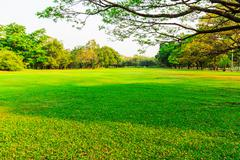 Green grass field in the park Stock Photos