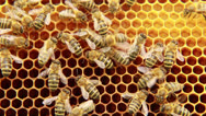 Stock Video Footage of Bees on the honeycomb. 12