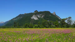 Flower meadow and mountain the kofel, bavaria, germany Stock Footage