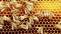 Bees on the honeycomb 11 Stock Footage