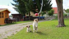 Dogs playing Ball 5 Stock Footage