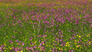 Stock Video Footage of meadow with wildflowers