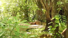 Forest and jungle Stock Footage