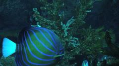 Underwater background Stock Footage
