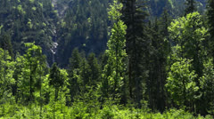 Forest the ammerwald, tyrol, austria Stock Footage