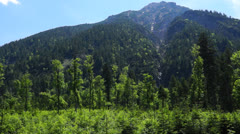forest the ammerwald, tyrol, austria - stock footage