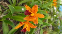 beautiful orange orchid - stock photo