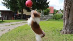 Dogs playing Ball 10 Stock Footage