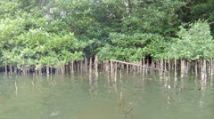 Mangroves in the delta of the river. sri lanka, bentota Stock Footage